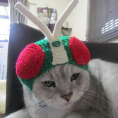 ペット/猫/被り物/手編み にゃめんライダーなピッコロくん=^ェ^=