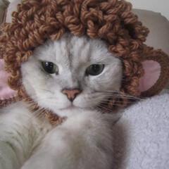 猫/づら/干支 申年のづら=^ェ^= ウィッキー♪なピッ…