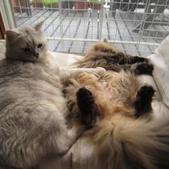 ペット/猫/予防接種 昨日は年1の予防接種+健康診断で。。。大…