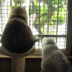 ペット/猫/夫婦/雨 今日は1日中雨でした^^; 夫婦にゃんず…