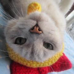 猫/被り物/手編み ドラミちゃんなピッコロくん=^ェ^=