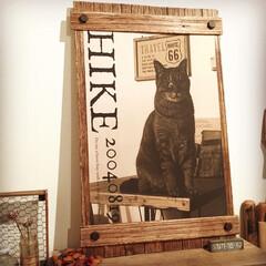 ボルト/ポスターフレーム/すのこリメイク/DIY 親バカ全開で作った 愛猫のなんちゃってポ…