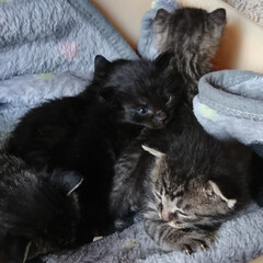 キジトラ/黒猫/子猫/フォロー大歓迎/ペット/ペット仲間募集/... にゃんこの日(=゚ω゚=)にゃので😻💕 …