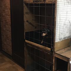 ミニピン/ペット/犬/小型犬/DIY収納/収納/... 犬のゲージと棚作ったよ!!完成しました!!