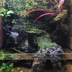 熱帯魚/インテリア/水草/水槽/システムテラ システムテラ30 水槽造りってのも意外に…