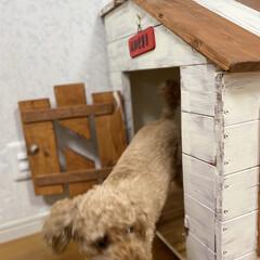 犬小屋/おしゃれ/DIY/動物モチーフグッズ 愛犬のお家DIY(3枚目)