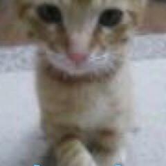 ペット仲間募集/猫 家族になった頃のまだまだ赤ちゃんだった頃…(2枚目)