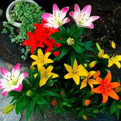 元気/咲き誇る/ビタミンカラー/花壇 色鮮やか 元気になる色ですね🌼🌼🌼