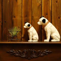ビクター犬/ニッパー/愛くるしい 首を曲げる角度が愛くるしいですね
