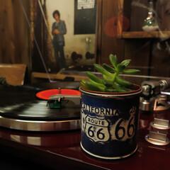 多肉植物/レコード 多肉植物とレコード 良い音楽を聴かせれば…