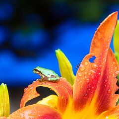 木の家/阿部興業株式会社/宇都宮市/栃木県/甘い香り/雨上がり/... 雨上がり🎵    カエルちゃんたちが、外…