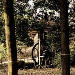 公園/森の中/ひっそり/水車小屋/茨城県/茨城県歴史館 森の中にひっそりある水車小屋 時間で水が…