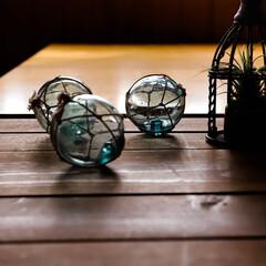 エアプランツ/木の家/宇都宮/骨董品/雑貨/インテリア/... 海にプカプカ浮いていたブイ オシャレなイ…