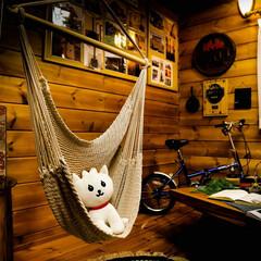 栃木県/宇都宮/木の家/ネコ/マドレーヌ/ハンモック ハンモックは、お気に入りの場所 マドレー…