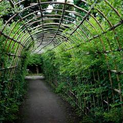向島百花園/森林浴/蚊/ひょうたん この前の公園散歩の続き 森林浴効果?緑の…