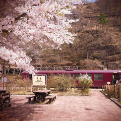 間藤駅/ローカル線/桜/わたらせ渓谷鐵道 今年は桜をゆっくり見る機会がありませんで…
