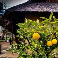 古民家/江戸東京たてもの園/釜戸/なつかしい 古民家で釜戸の実演してました。 釜戸で炊…