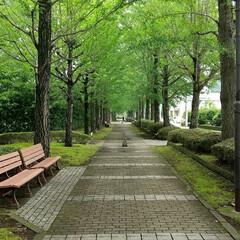 宇都宮/散歩/気持ちいい/緑のある暮らし/緑の中/公園 街中の公園 マスクを外して、緑の中を散歩…