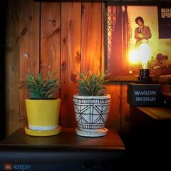 阿部興業株式会社/木の家づくり/木の家/宇都宮/レコード/緑のある暮らし/... 多肉ちゃん達 一番手前(ちょっと曲がった…(2枚目)