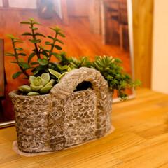 多肉植物/完成見学会/インテリア 多肉ちゃん プロの方の作品 完成邸の展示…