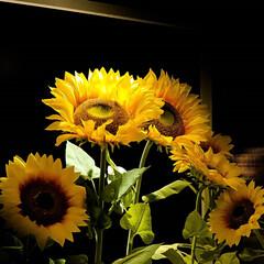 ひまわり/造花/アートフラワー ひまわりは見ていると元気になります。 作…