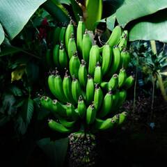 バナナ/新宿御苑 最近、バナナ食べてないなぁ