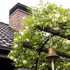 バラ/アーチ/煙突/木の家 バラのアーチとベルと煙突
