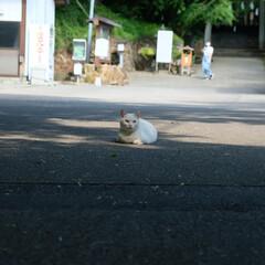 梅雨の晴れ間/お散歩/ネコ/ねこ/佐野市/神社/... 先日の梅雨の晴れ間 ここのところ運動不足…(2枚目)