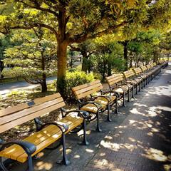 のどか/いい天気/ベンチ/日比谷公園 いい天気 誰も座っていません のどかな時…