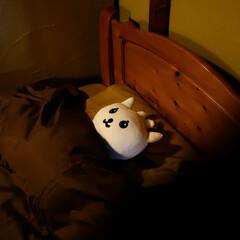 新築/リフォーム/宇都宮/木の家づくり/木の家/スギ床/... 素材にこだわった寝室です。 快適な睡眠の…