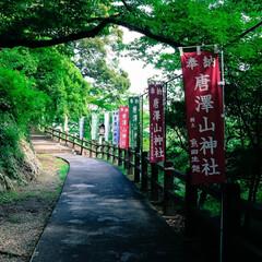 梅雨の晴れ間/お散歩/ネコ/ねこ/佐野市/神社/... 先日の梅雨の晴れ間 ここのところ運動不足…