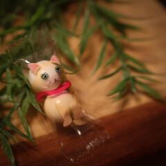 木の家/チョコ/ネコ/ねこ ねこちゃんがいっぱいです🎵 大変なことに…(2枚目)
