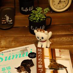 ペットと暮らす住まい/猫と暮らす住まい ネコちゃんと暮らす家づくり