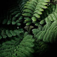 シダ植物/植物園 シダ植物 特徴的な葉っぱが面白いですね