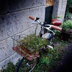 街角/自転車/アート/植物 街を歩いていると、ふとアートに出会います