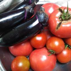 野菜たっぷり 朝とったトマトとなす。  我が家では夏野…