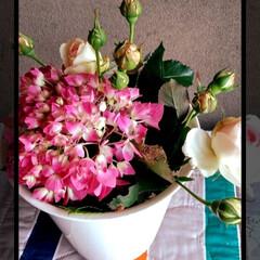 玄関/6月/バラ/紫陽花/アレンジ/簡単/... 紫陽花とバラを アレンジしました♡  朝…