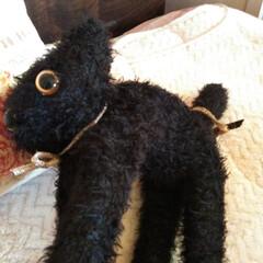ジジ/黒猫/フォロー大歓迎/猫/にゃんこ同好会/雑貨/... 子猫が来たよー♪♥  一緒に寝てます(笑…