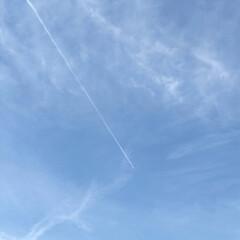 青空/飛行機雲 久しぶりの青空です。 昨日までの雨でした…