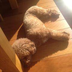 寝姿 降り注ぐ陽光