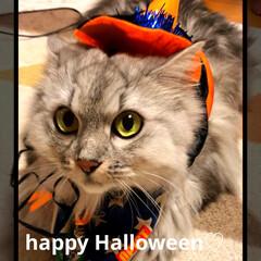 ハロウィン/Happy/みみ/猫/魔女/かぶりもの/... happy Halloween♬☺︎☺︎…