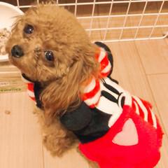 犬バカ/愛犬/わんこ服/ペット/犬 今の季節お散歩の時は、寒いので必ずお洋服…