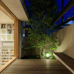 庭/デッキ/パーゴラ/ぶどう/夕景 アズキナシの脇には葡萄を植えていますので…