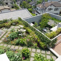 屋上庭園/デッキ/花壇/家庭菜園 屋上庭園から見下ろす。2階の屋上庭園、そ…(1枚目)