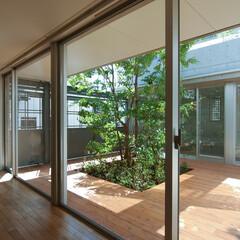 中庭/緑/ヒメシャラ/デッキ 中庭の向こうは寝室と和室。その上が屋上庭…
