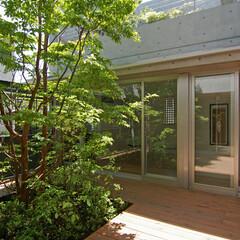 中庭/緑/ヒメシャラ/デッキ 屋上庭園の緑が見えます。デッキは木製で、…