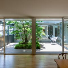 中庭/緑/ヒメシャラ/デッキ リビングから中庭を見ています。コの字型に…