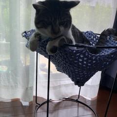 植木鉢/手編み/毛糸/にゃんモック/ねこ 嫁が作った手編みのにゃんモック。 取り合…(4枚目)