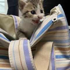 ネコ/子猫 新しい家族が家に来た! 名前はまだはっき…