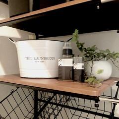 衣類洗剤/洗剤/ランドリー 細かい洗剤は、THE LAUNDRESS…